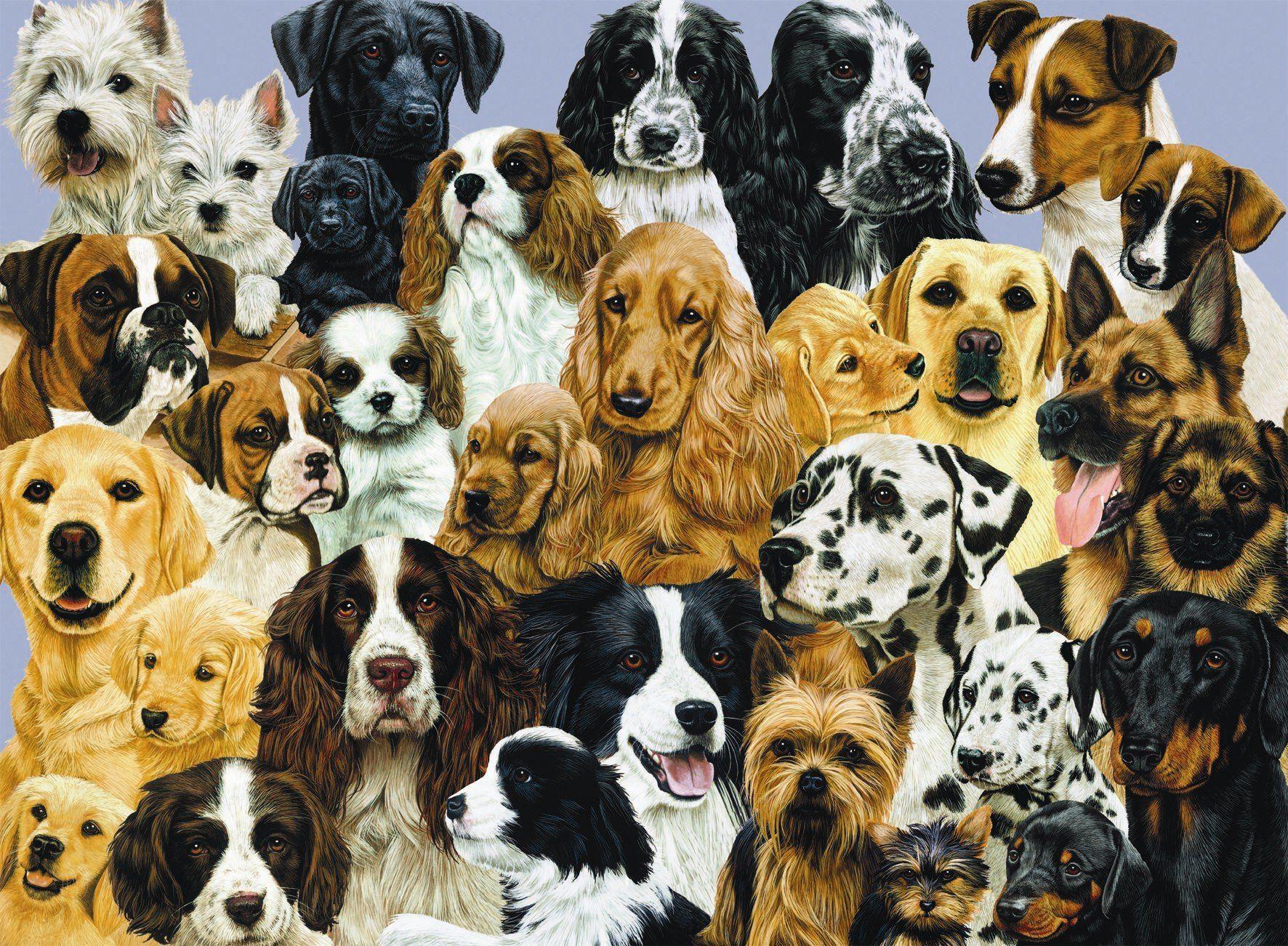 картинки собак разных пород вместе вкусные